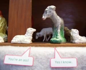 Sheep and Ass